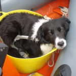 Jack in the anchor bucket!